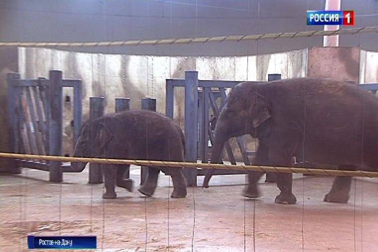 Взоопарке Ростова-на-Дону проснулся медведь Андрюша